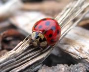 Radical Reconstruction Fine Art Featuring Nancy Wood - Lady Bug