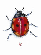 Good Luck Digital Art Metal Prints - Lady Bug Metal Print by Russell Pierce