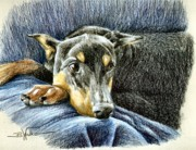 Pinscher Drawings Posters - Lady in Waiting Poster by Barbara Walker