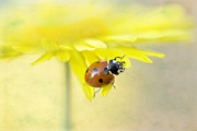 Ladybird Photos - Lady in Yellow by Jacky Parker