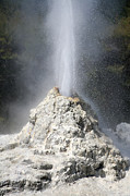 Gushing Water Framed Prints - Lady Knox Geyser, Wai-o-tapu Geothermal Framed Print by Richard Roscoe