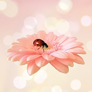 Floral Digital Art - Lady on pink by Sharon Lisa Clarke