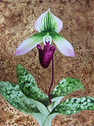Kerri Ligatich Prints - Lady Slipper Orchid with Gold Leaf background Print by Kerri Ligatich