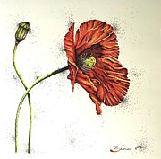 Red Poppies Drawings - Lady Yee by Katharina Filus