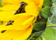 Ladybeetle Photos - Ladybeetle and Butterfly by Eva Jo Wu