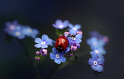 Y120817 Prints - Ladybird And Ant Print by Ellen van Deelen