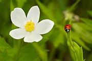 Macro Work - Ladybird beetle by Mircea Costina Photography