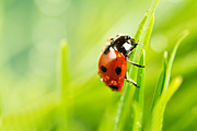Longhorn Photos - Ladybird by Copyright OneliaPG Photography