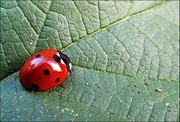 Ladybird Print by Olivia Narius