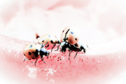 Sweet Spot Prints - Ladybirds I Print by Mandy Tabatt