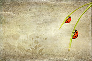 Insects Mixed Media Metal Prints - Ladybirds Metal Print by Svetlana Sewell
