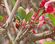 Natural Art - Ladybug and Crabapple by Rona Black