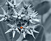 White Flower Photos - Ladybug flower by Rebecca Margraf