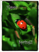 Macro Digital Art Framed Prints - Ladybug Happy Spring Card Framed Print by Carol Groenen