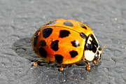 Annoying Metal Prints - Ladybug In The Sun Metal Print by Mark J Seefeldt