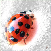 Crawling Posters - Ladybug Spectacular Poster by Ben and Raisa Gertsberg