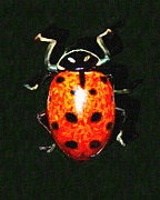Ladybug Print by Wingsdomain Art and Photography
