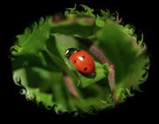 Ladybug Posters - Ladybug with Swirly Framing Poster by Carol Groenen