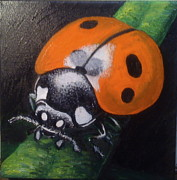 Jeff Arcel - Ladybugs are Lucky