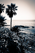 Orange County Framed Prints - Laguna Beach California Black and White Framed Print by Paul Velgos
