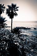 Paul Velgos - Laguna Beach California Black and White