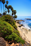 Laguna Beach Posters - Laguna Beach California Shoreline Poster by Paul Velgos