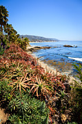 Southern Flowers Posters - Laguna Beach Coastline Photo Poster by Paul Velgos