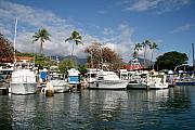 Lahaina Prints - Lahaina Marina On A Clear Day Print by Lita Kishbaugh