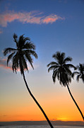 Lahaina Framed Prints - Lahaina Palms Framed Print by Kelly Wade