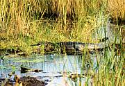 Alligators Photos - Laid Out Pretty by Jan Amiss Photography
