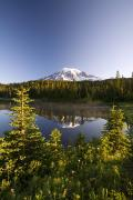 Tree Tops Posters - Lake And Mount Rainier, Mount Rainier Poster by Craig Tuttle