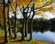 Autumn Foliage Photos - Lake And Trees, Mount Stewart, Co Down by The Irish Image Collection