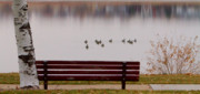 Autumn Prints Framed Prints - Lake Bench Framed Print by James Bo Insogna