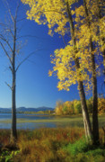 Champlain Photos - Lake Champlain McCuen Wildlife Area by John Burk