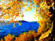 Yellow Leaves Digital Art Prints - Lake Coeur dAlene through Golden Leaves Print by Carol Groenen