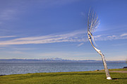 Promenade Photos - Lake Constace Friedrichshafen by Joana Kruse