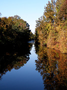 Lake Drummond Canal Print by Feva  Fotos
