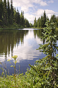 Lake Irene Prints - Lake Irene Rocky Mountain National Park Colorado Print by Andre Babiak