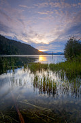 Scenic Idaho Prints - Lake Reeds Print by Idaho Scenic Images Linda Lantzy