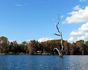 Dunnellon Photos - Lake Rousseau by Judy Wanamaker