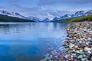 Many Glacier Prints - Lake Sherburne Shoreline Print by Greg Nyquist