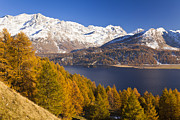 Graubunden Framed Prints - Lake Sils In Autumn Framed Print by Frank Lukasseck