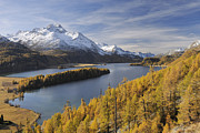 Engadin Valley Posters - Lake Sils With Trees In Autumn, Piz Da La Margna, St Moritz, Maloja District, Engadin, Graubunden, Switzerland Poster by Martin Ruegner