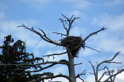 Sunbath Posters - Lake Tahoe Eagle Nest Poster by LeeAnn McLaneGoetz McLaneGoetzStudioLLCcom