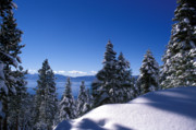 Snow Trees Posters - Lake Tahoe in Winter Poster by Kathy Yates