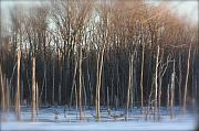 Indiana Mixed Media Metal Prints - Lake Trees of Winter Metal Print by Bruce McEntyre