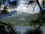 Idaho Scenery Prints - Lake View through a Pine Tree - Scenic Idaho Print by Photography Moments - Sandi