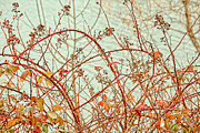 Blackberry Photo Posters - Lakeside Poster by Bonnie Bruno