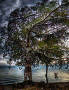 Lakeside Tree Print by Tommy Farnsworth