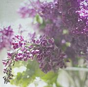Lilacs Framed Prints - Lalac Bokeh Framed Print by Rebecca Cozart